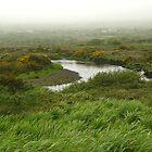 Mist in Ireland by Lucinda Walter