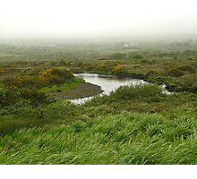 Mist in Ireland Photographic Print