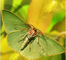 EMERALD MOTH by SimoneYvette