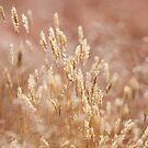 Grassland Reverie by Sarah-fiona Helme