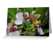 Tricolored Orchid Greeting Card