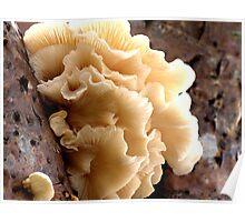 Burleigh Heads Fungus  Poster