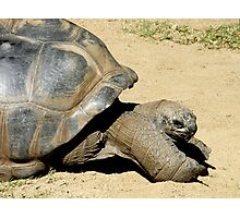 Stretch Tortoise Photographic Print