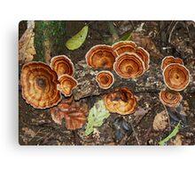 fungus #3 Natural Arch  Canvas Print