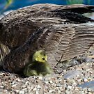Protected by Mother by George I. Davidson