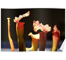 A forest of carnivorous plants Poster