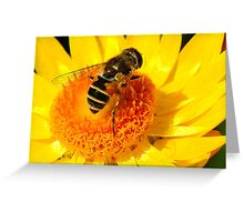 The Big Bee on the Yellow Flower Greeting Card