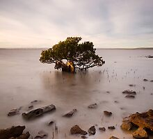 Timeless tree by Tony Middleton