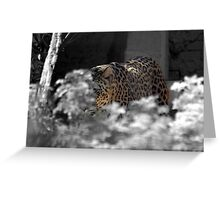 leopard adelaide zoo Greeting Card