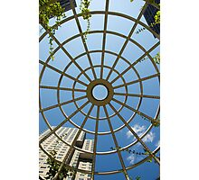Looking Up - Spring Photographic Print