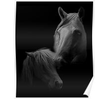 Equines and Shadow Poster
