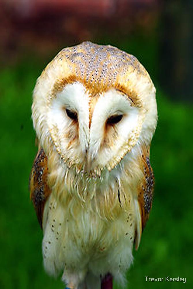 Barn Owl by Trevor Kersley