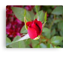 *RED ROSE BUD* Canvas Print