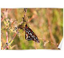 Butterfly Holding On Poster