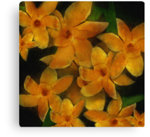 For The Love of Daffodils Canvas Print