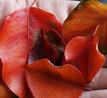 Fall in July by Adam Bykowski