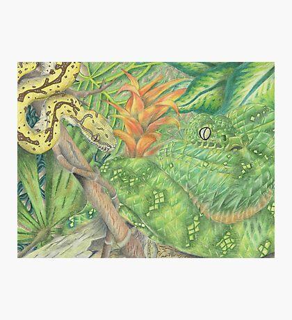 Emerald Tree Boa and Green Tree Python Photographic Print