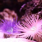 anemone by itsmymoment
