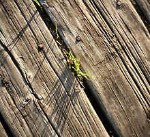Tuft of Grass on an Old Wooden Pier by M Sylvia Chaume