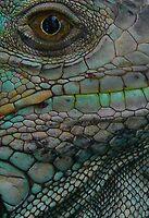 Iguana Eye by avocet