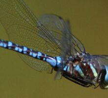 Dragonfly in Flight Sticker