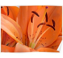 Lily stamens Poster