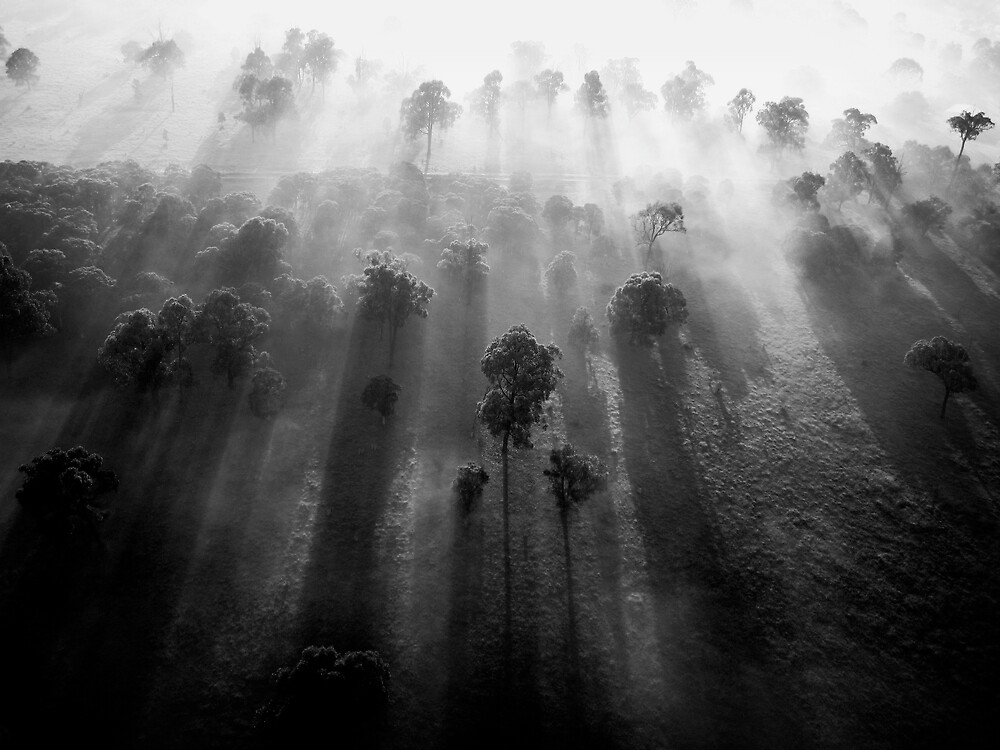Through The Trees Comes The... (B/W) by Jeremy Somers