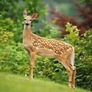 Friendly Fawn by Jane Best