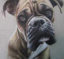 Boxer close up in colored pencil by InkreDesigns