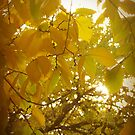 Autumn Glow by Shannon Holm