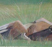 Lazing Kangaroo by Hannelore Rack