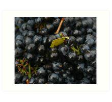 Grapes of Merlot Art Print