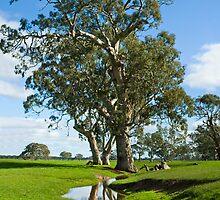 Willbarr Creek S.E by Matt Harvey