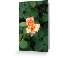 A Rose is a Rose 7 Greeting Card