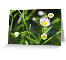 Daisy Daisy Give Me Your Answer Do Greeting Card