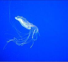 Jellyfish by GirlJack