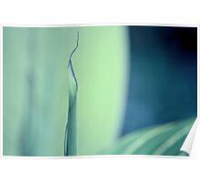 Furled leaf Poster