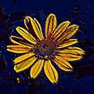Yellow Flower by Jenebraska
