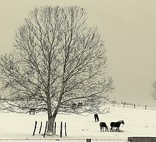 Amish Winter by Tom Michael Thomas