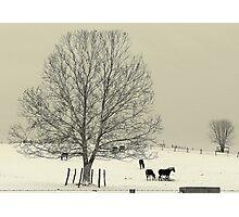Amish Winter Photographic Print
