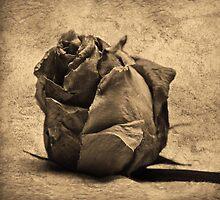 Sepia Rose by Lorraine Creagh