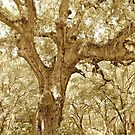 The Southern Live Oak by ©Dawne M. Dunton