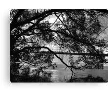 Mangrove Mystery Canvas Print