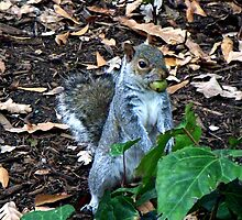 Gathering Nuts by Margaret  Hyde