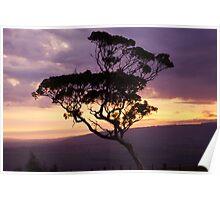 Eucalyptus Sunset Poster