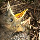 6 days old - thrush babies by FelicityB