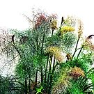Fern in the garden at Lyme,Dorset UK by lynn carter