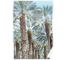 Dead Sea Palms Poster