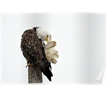 Time Out - American Bald Eagle Poster