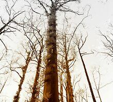 Fire trees... by JAZ art